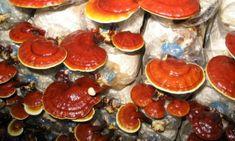 I funghi possono agire come un vero e proprio antibiotico naturale, concorrendo a mantenere elevato il livello degli anticorpi, e c'è chi li ritiene