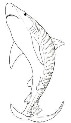 haie ausmalbilder ausmalbilder   malvorlagen tiere, malvorlagen für jungen, lustige malvorlagen