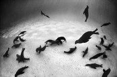 David Doubilet признанный мастер во всем мире. Его подводная съемка завораживает! (125 фото - 7.39Mb) » Фото, рисунки