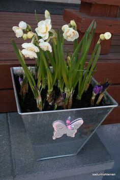 kukkaistutus