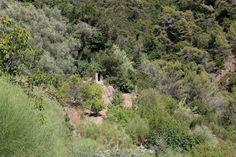 Vallebona (IM) - Vallone del torrente Borghetto