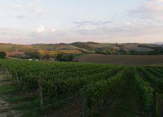 AZIENDA AGRICOLA GALASSO, Castelfranco Piandiscò www.madeintuscany.it/site/dt_portfolio/galasso-winery #chianti #arezzo #wines
