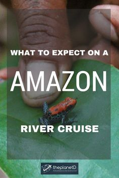 What to Expect on an Amazon River Cruise | The Planet D Adventure Travel Blog | An Amazon River Cruise isn't your typical cruise. We now know having just returned from a Caribbean Cruise. While many other cruises are all about creating entertainment and activities, an Amazon River Cruise is about experiencing life on the world's largest river and exploring the culture, wildlife and beauty of the world's largest rainforest.