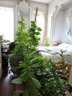 Roof work on our terrace meant all the pots had to come inside. The bedroom turned into an instant hot house!