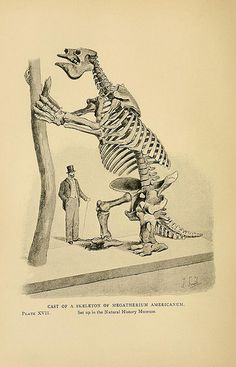 "Cast of a Skeleton of Megatherium americanum illustration in ""Extinct Monsters; a Popular Account of Some of the Larger Forms of Ancient Animal Life"" by Reverend HN Hutchinson, featuring illustrations by the respected wildlife artist, Joseph Smit (& others), 1896 edition.  Biodiversity Library via Bibliodyssey."