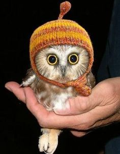 AWWW baby owls!