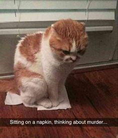 20 Funny Animal Pictures Of The Day #dogsfunnyhumor