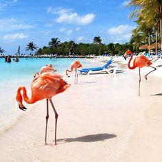 View of the Day: Oranjestad, Aruba | Coastalliving.com