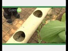 Salah satu cara untuk mendapatkan sayuran segar tanpa pestisida adalah dengan menanam sendiri sayuran. Yang jadi masalah adalah tidak semua orang mempunyai lahan untuk menanam sayuran. Oleh karena itu ada cara dimana anda bisa menanam sayuran dengan memanfaatkan air sebagai media pengganti tanahnya atau yang disebut juga denganhidroponik. Bagi yang mempunyai hobi berkebun, carahidroponik ini… Hydroponic Lettuce, Hydroponic Farming, Hydroponics, Empty Glass Bottles, Organic Horticulture, Bottle Garden, Vegetable Garden, Container Gardening, Planting Flowers