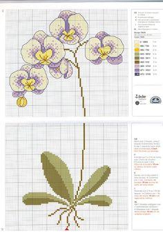 Orchid. Gallery.ru / Фото #138 - R*I*C*O* 4 - mila29