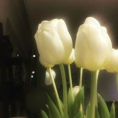 Ihanaa lauantai-iltaa! Näistä kahden euron tulppaaneista on ollut muuten iloa jo monta päivää.  #tulips #tulip #flower #instaflower #instaflowers #kukka #tulppaani #kukkakimppu #home #myhome #instahome