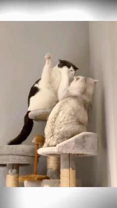 Animals And Pets Videos Activities Cute Cat Gif, Cute Funny Animals, Funny Cats, Cute Cats And Kittens, I Love Cats, Cute Animal Videos, Mundo Animal, Funny Cat Videos, Baby Animals
