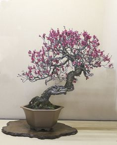 Shunka-en Bonsai Museum, pic by Valavanis. Bonsai Garden, Bonsai Art, Bonsai Plants, Bonsai Trees, Prunus Mume, Micro Garden, Home Garden Design, Plantar, Small Trees