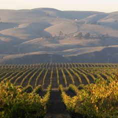 California's Santa Barbara County owes its success with cool climate wines (notably Chardonnay, Syrah and Pinot Noir) to a geological oddity: coastal ...