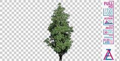 Sourwood Flowers Tree