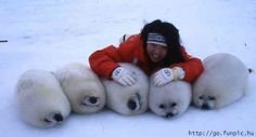 baby seals.....I cant even breathe...they're sooo fuzzy