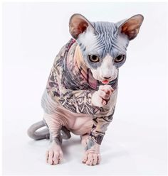 Unusual tattoo sleeves for Sphynx Cat - Unusual tattoo sleeves for . - Unusual tattoo sleeves for Sphynx Cat – Unusual tattoo sleeves for Sphynx Cat The Purple, Devon Rex, Chat Sphynx, Sphynx Cat Clothes, Unusual Tattoo, Sleeve Tattoos, Tattoo Sleeves, Newborn Kittens, Chinese Crested Dog