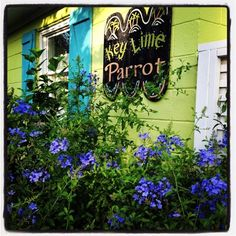 Key Lime Parrot Tybee Island vacation rentals