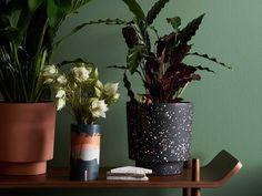 Black terrazzo pot plant