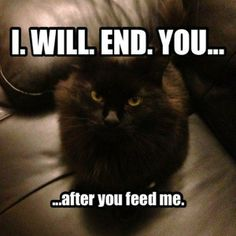 Fun Claw - Funny Cats, Funny Dogs, Funny Animals: Funny Cats - 23 Pics