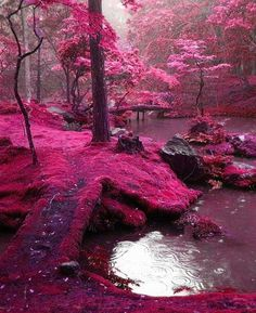 It must be cherry blossom time in Japan, right? Where else could there be such ethereal beauty?  Why, in Heaven Looking Bridges Park,  Ireland!