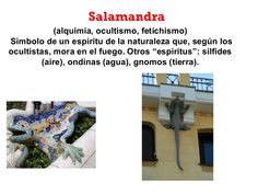 Salamandra (alquimia, ocultismo, fetichismo) Símbolo de un espíritu de la naturaleza que, según los ocultistas, mora en el...