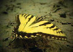 Spring Showers Bring Butterflies