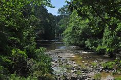 Kisatchie National Forest - Kisatchie Bayou at Kisatchie Bayou Campground - fond memories of times here when we lived in Louisiana
