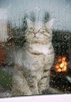 Cat kitten by a rain rainy window pane Rainy Dayz, Rainy Night, Sound Of Rain, Singing In The Rain, Rainy Window, I Love Rain, Autumn Rain, Gatos Cats, All Nature