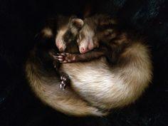 Our sleepy ferrets