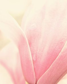 Nature Photography  spring pink flower nature by MorganRosePhoto, $30.00