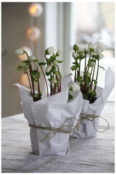 Maak je huis klaar voor de feestdagen – met winter bloemen   Maison Belle