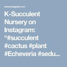 "K-Succulent Nursery on Instagram: ""#succulent #cactus #plant #Echeveria #sedum #agavoides #nursery #green #succulents #nature #flower #cacti #lithops #ebony #aeonium…"" • Instagram"