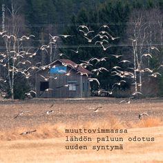 Gooses, Haiga-photo, spring
