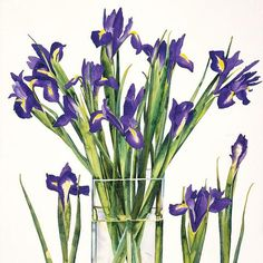 Irises by Claire Winteringham, Fine Art Greeting Card, Watercolour and Gouache, Blue irises in glass vase