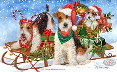 "Wire Fox terrier Christmas Holiday Cards are 8 1/2"" x 5 1/2"" and come in packages of 12 cards. One design per package. All designs include envelopes, your personal message, and choice of greeting. Select your greeting from the drop-down menu above.Add your personal message to the Comments box during checkout."