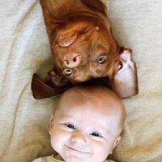 Baby pitbulls are the cutest thing in the world!