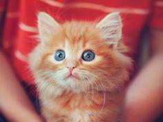 . #cats #cutecats #lovelycats #kittens #ilovecats #pussycats #animals #animalovers