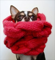 Not everyone appreciates a hand knit scarf...