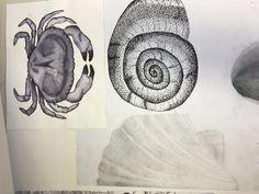 #shell #finedots #waterandink #pencildrawing #portfolio Pencil Drawings, Shells, Profile, Student, Tattoos, Seashells, User Profile, Tatuajes, Conchas De Mar