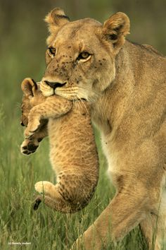 Mother and Cub, (c) Beverly Joubert