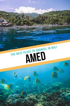 The best snorkeling inBAli can be found in Amed, over on the east coast. Direct snorkeling from the beach will award you with shallow reefs and a shipwreck. Travel Guides, Travel Tips, Travel Abroad, Asia Continent, Bali Travel, Hard Coral, Southeast Asia, Day Trips, Adventure Travel