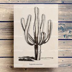 Antique botanical print, Succulent print, Png files, Euphorbia, Botanical clip art, Instant download print, Large poster, PNG JPG HQ 300dpi