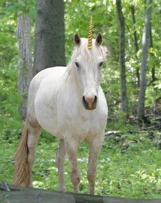 Unicorn looks like cinnamon ! :D