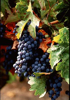 Soon to be Santa Cruz wine