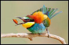 Красивые макроснимки насекомых