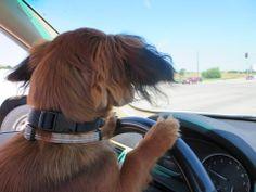 Doogie Driving