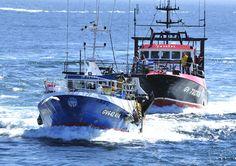 Retour des Pêcheurs au port du Guilvinec, Finistère, Bretagne
