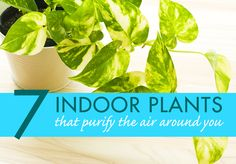 7 Houseplants for Improving Indoor Air Quality.  If you're experiencing issues with indoor air quality, not to worry!   We identified the best plants to filter out pollutants and other toxic chemicals from indoor air.