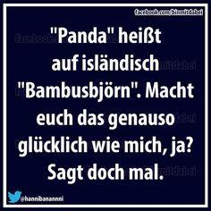 Panda heißt auf isländische Bambusbjörn